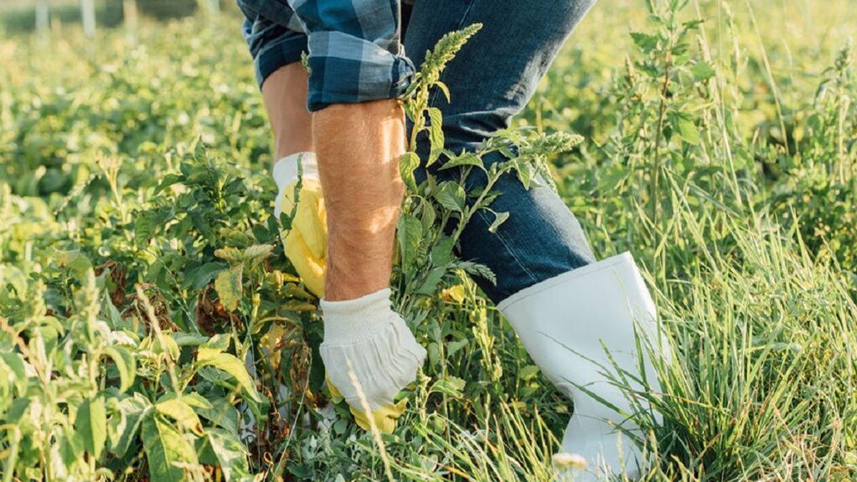 Cómo quitar las malas hierbas de tu jardín o de tus macetas: los pasos básicos que deberás seguir.