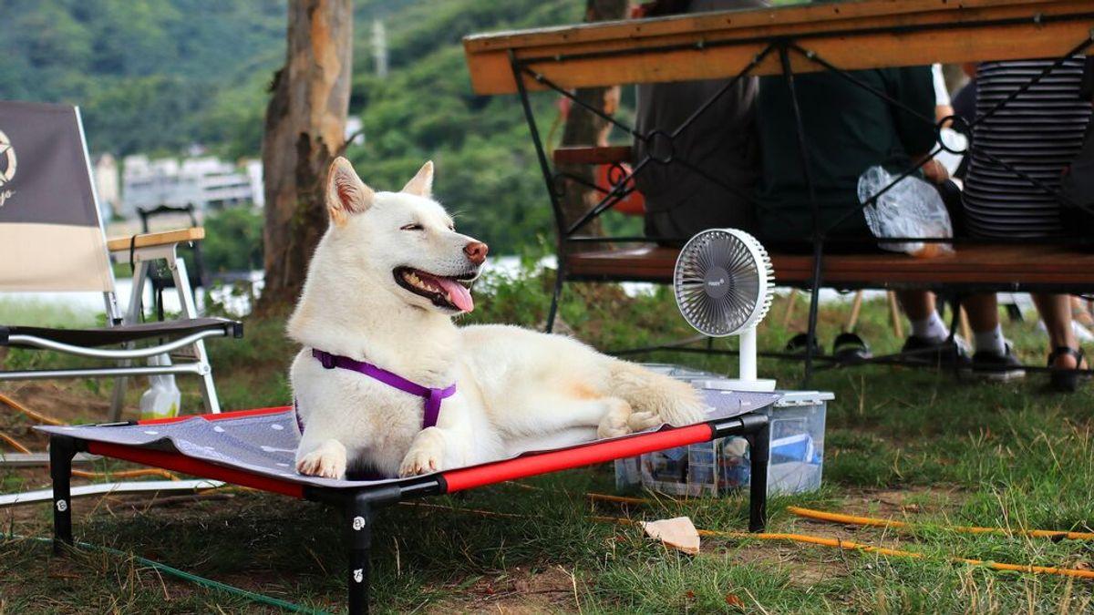 Cómo saber si tu mascota sufre un golpe de calor y qué hacer para remediarlo