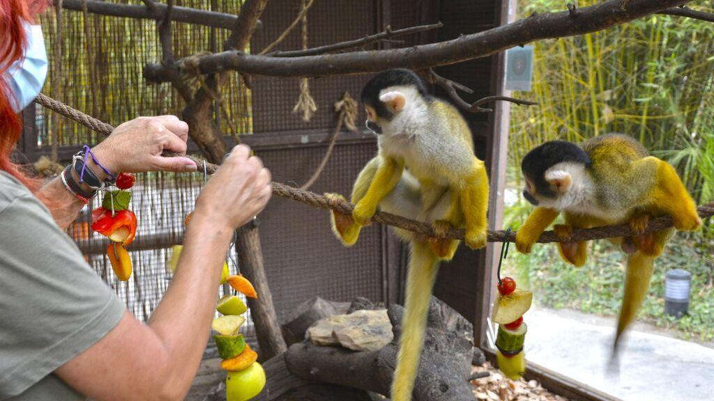 El zoológico Terra Natura de Benidorm activa el protocolo de prevención para los animales contra el calor