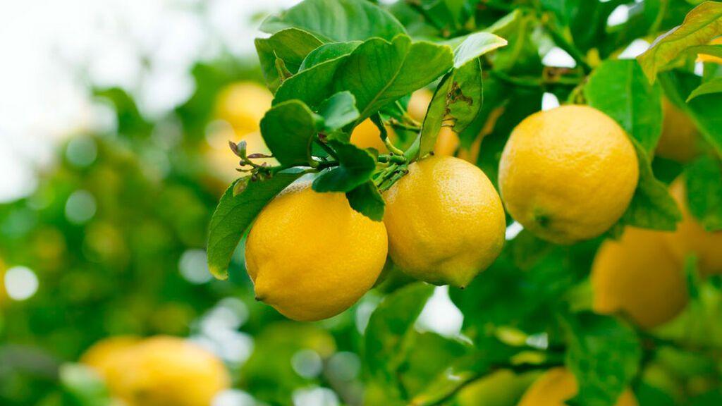 El limón también puede convertirse en tu mayor aliado.