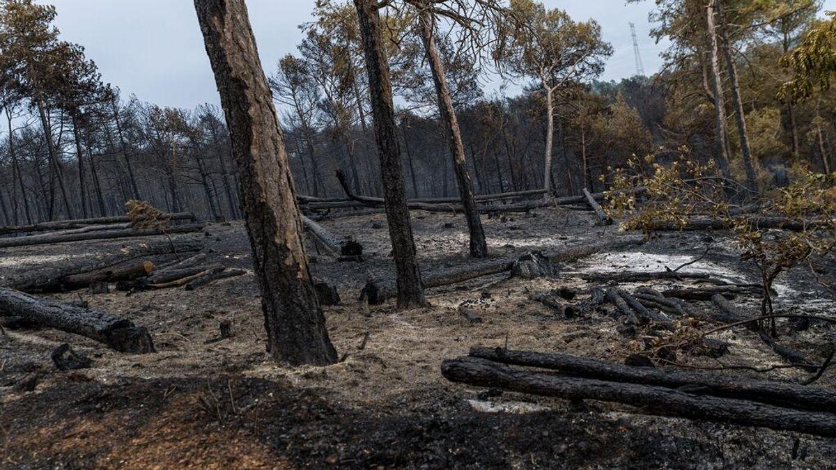 Casi toda España, en riesgo de incendio por las altas temperaturas