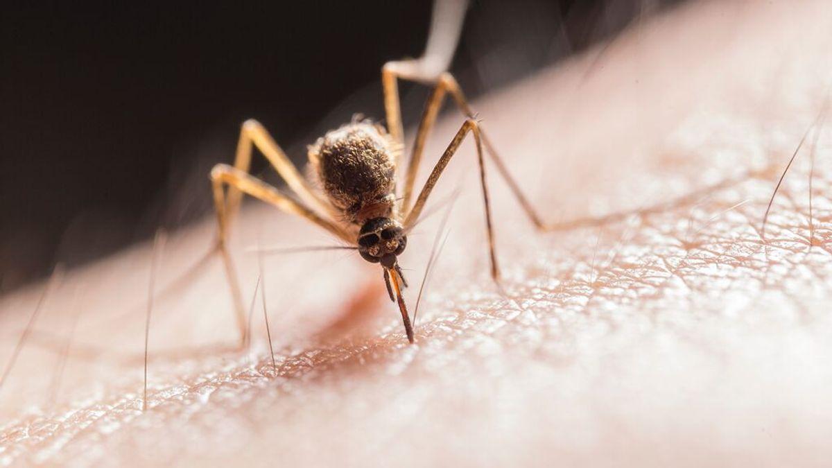 Cómo aliviar las picaduras de mosquitos