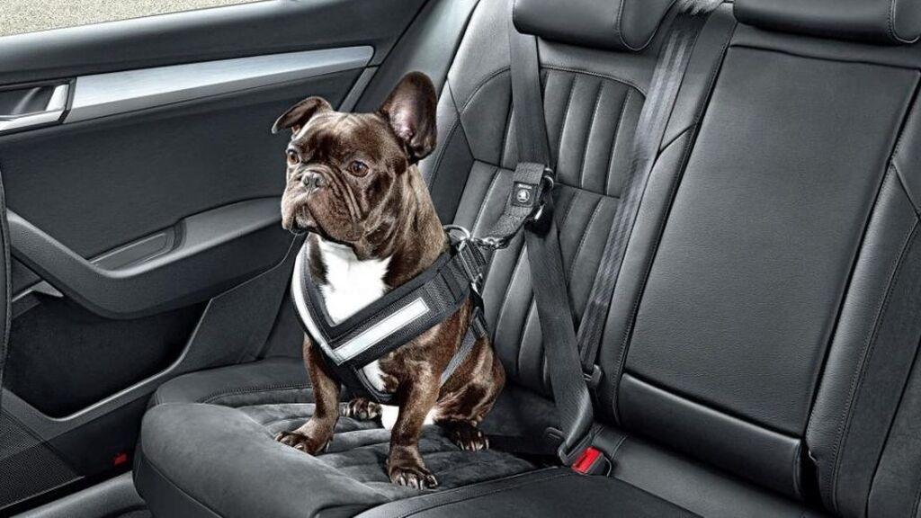El animal no deberá interferir en el movimiento y la visión del conductor.