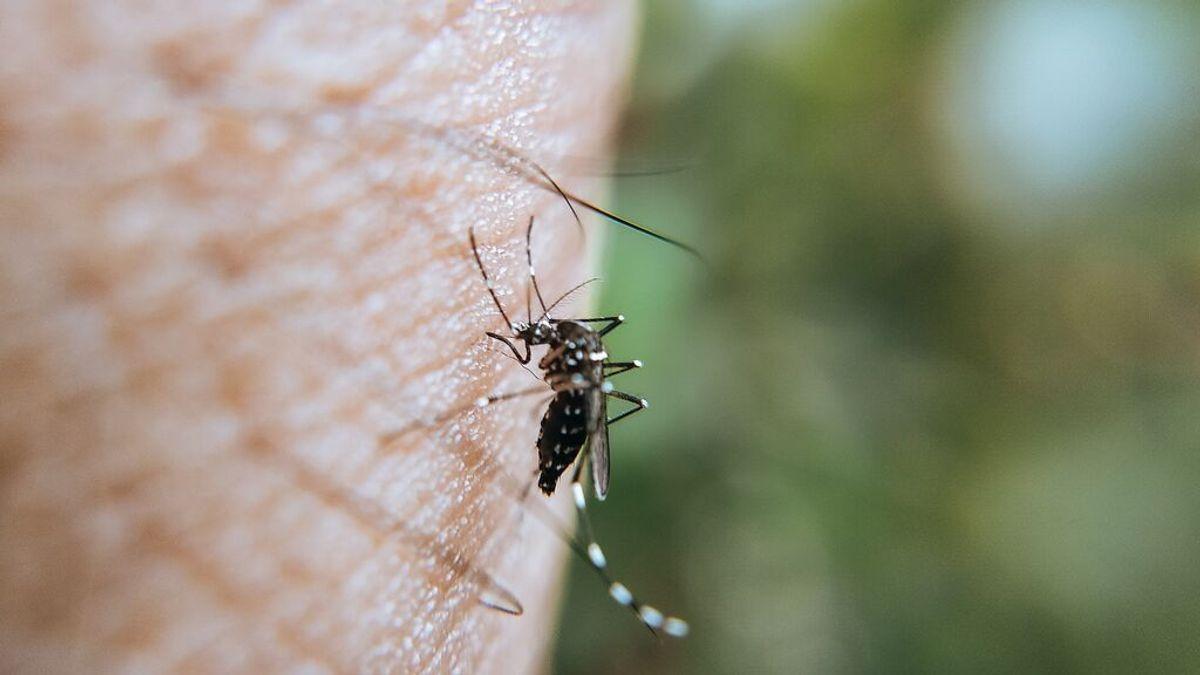 Día mundial del mosquito: remedios caseros para evitar sus picaduras