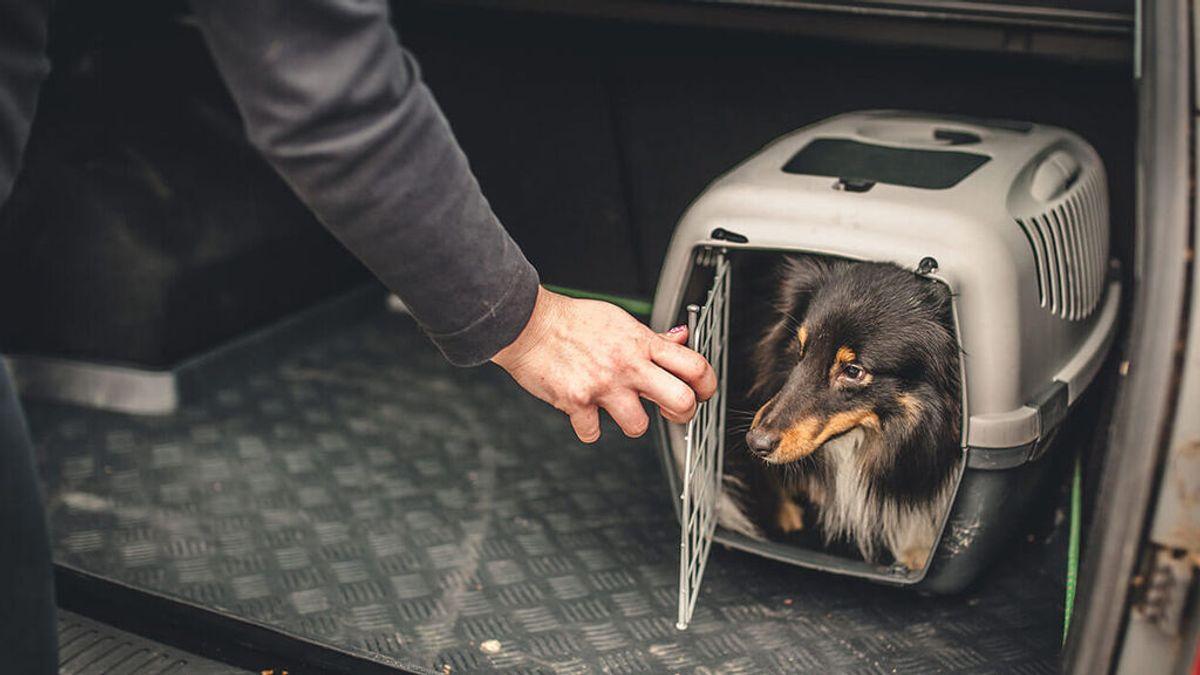 Instrucciones para llevar el pelo en el maletero del coche de forma legal: así podrás viajar con seguridad y siguiendo la ley.