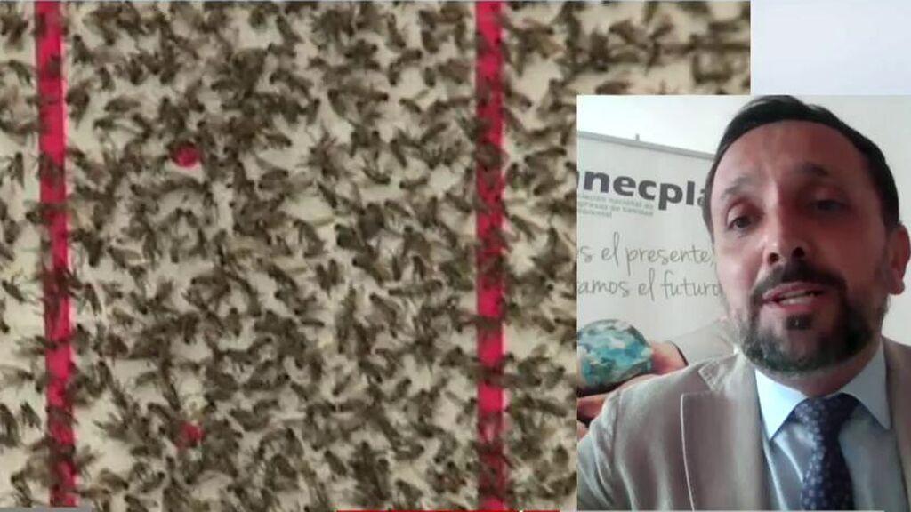 Plagas de mosca negra