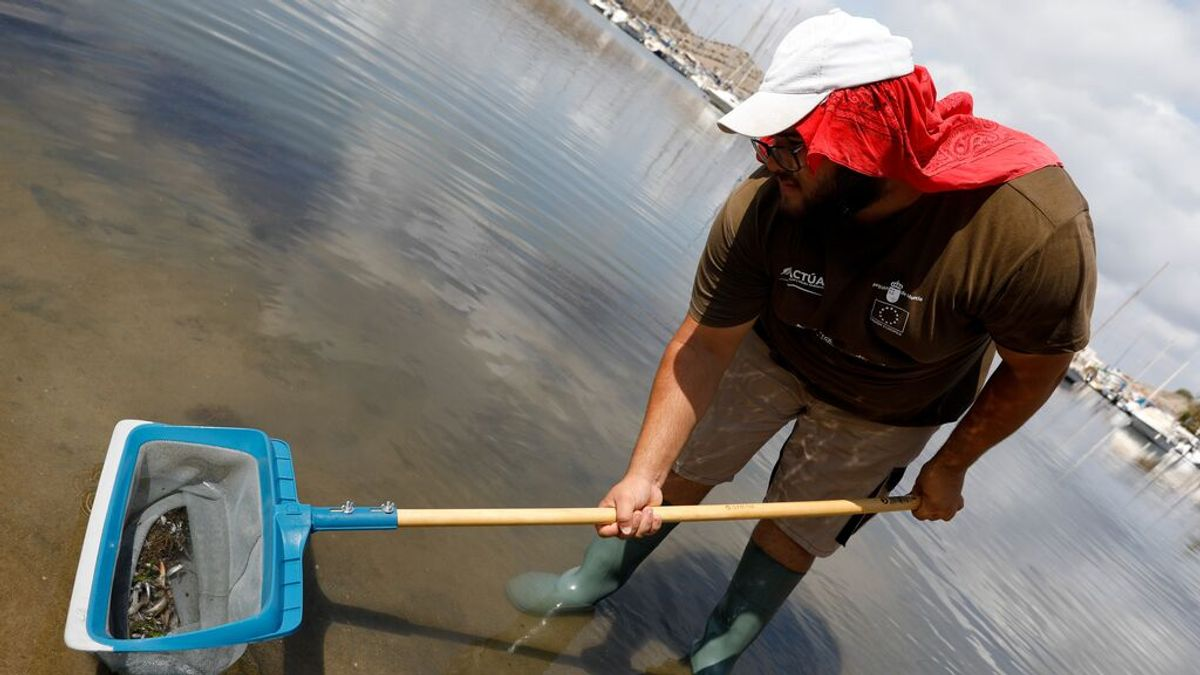 Cierra ocho playas de La Manga para retirar los peces muertos en el Mar Menor