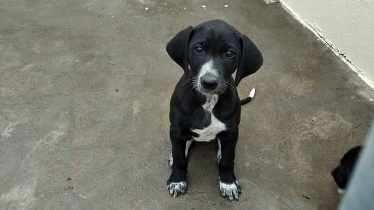 """El cuidador de la residencia canina donde han muerto tres perros: """"Soy culpable, cometí una negligencia"""""""