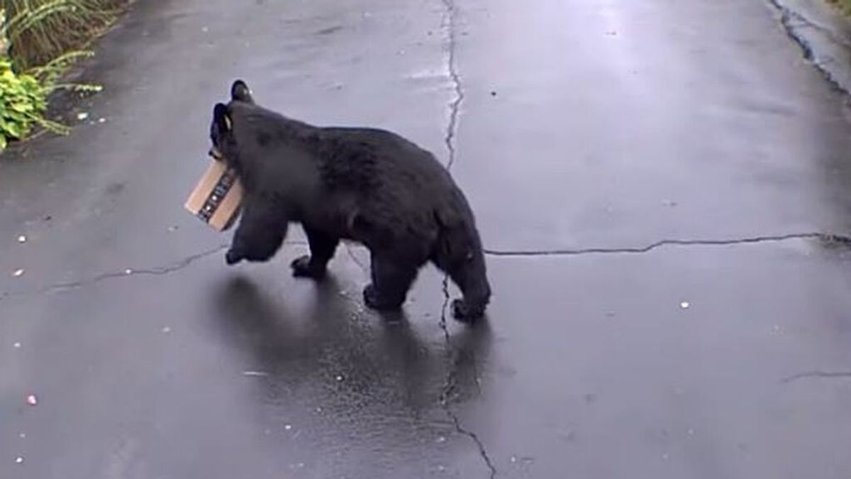 Una mujer graba a un oso robando su paquete de Amazon