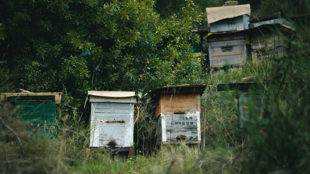 Las colmenas pueden llegar a contener hasta 80.000 abejas