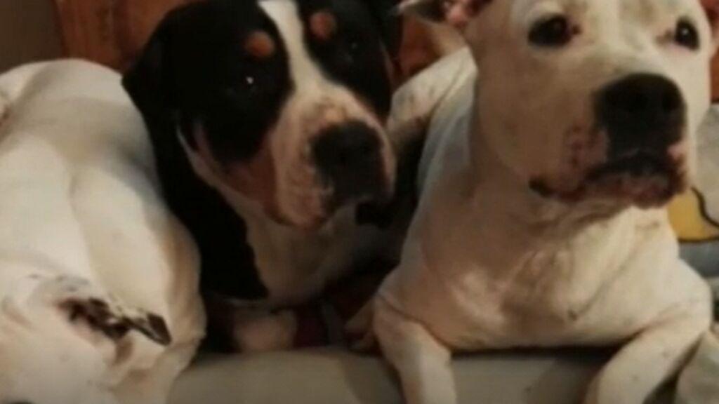 Abandonados sedientos, hambrientos y al sol: la muerte de cuatro perros en El Alamo