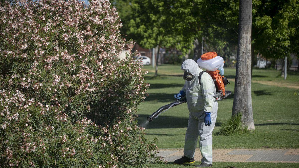 Lepe, en Huelva, en alerta por la aparición del virus del Nilo en un caballo cerca del casco urbano