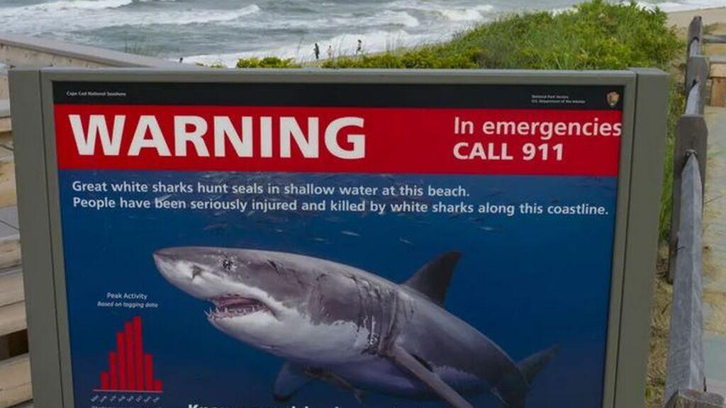 Muere un surfista atacado por un tiburón en Australia: le arrancó el brazo de un mordisco