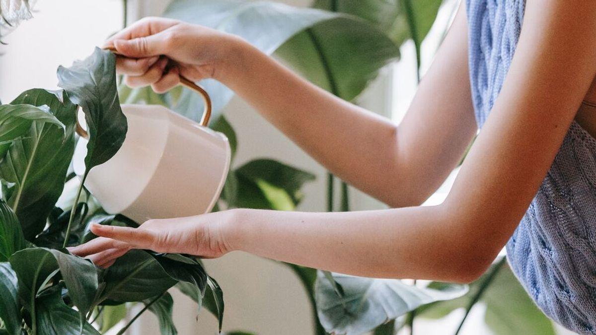 Cómo revivir una planta marchita tras las vacaciones