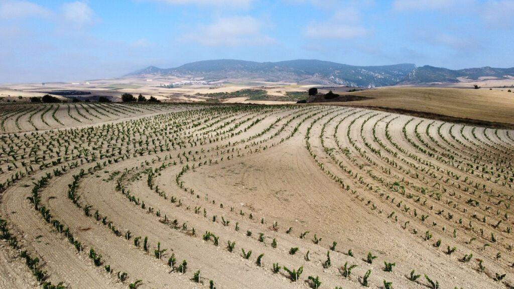La bodega Roda de La Rioja inicia un proyecto enfocado a la viticultura regenerativa y ecológica