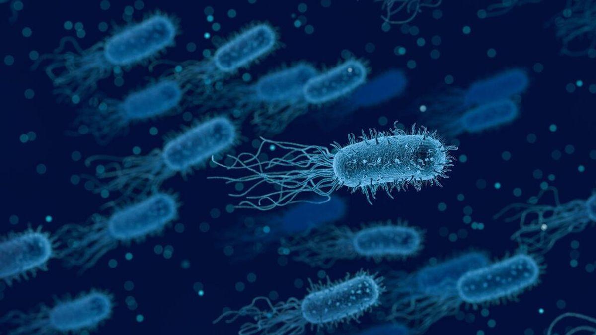 Así descubrimos cómo muchas bacterias pueden volverse resistentes a los antibióticos