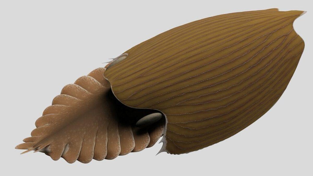 Titanokorys gainesi: descubren una nueva especie masiva de hace 500 millones de años