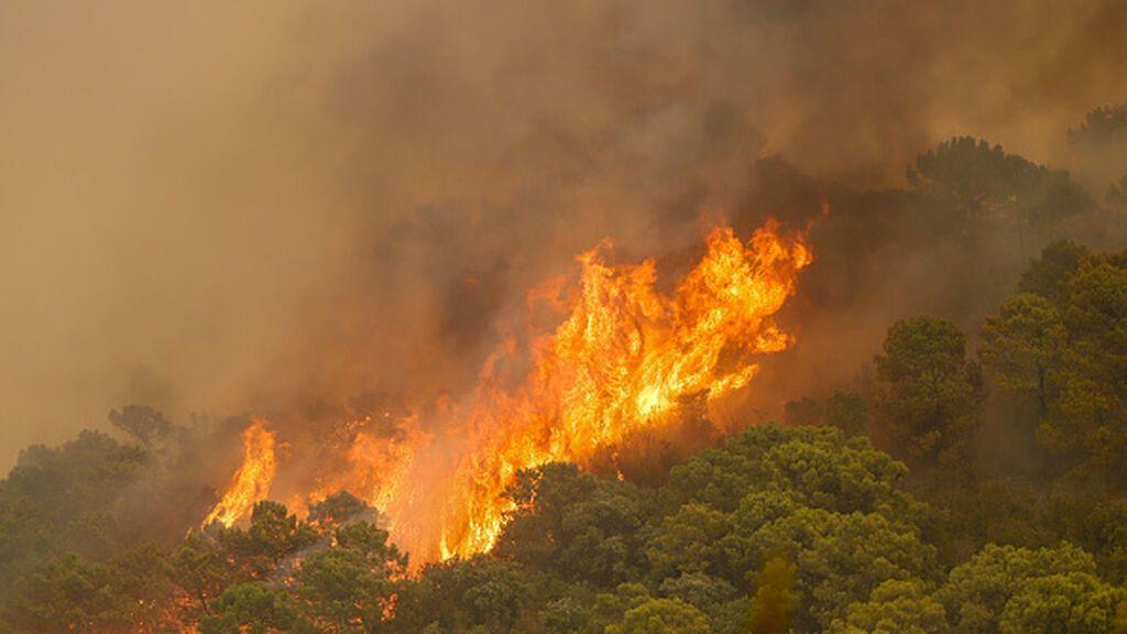 El incendio de Sierra Bermeja está fuera de la capacidad de extinción