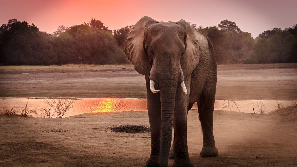 ¿Conoces el efecto elefante al volante? No vuelvas  a subirte al coche sin saber cómo evitarlo.