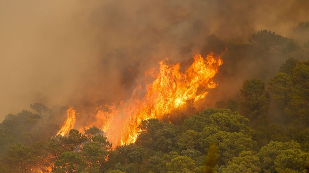 """El incendio de Sierra Bermeja está fuera de la capacidad de extinción: """"Es un monstruo hambriento y hay que confinarlo"""""""
