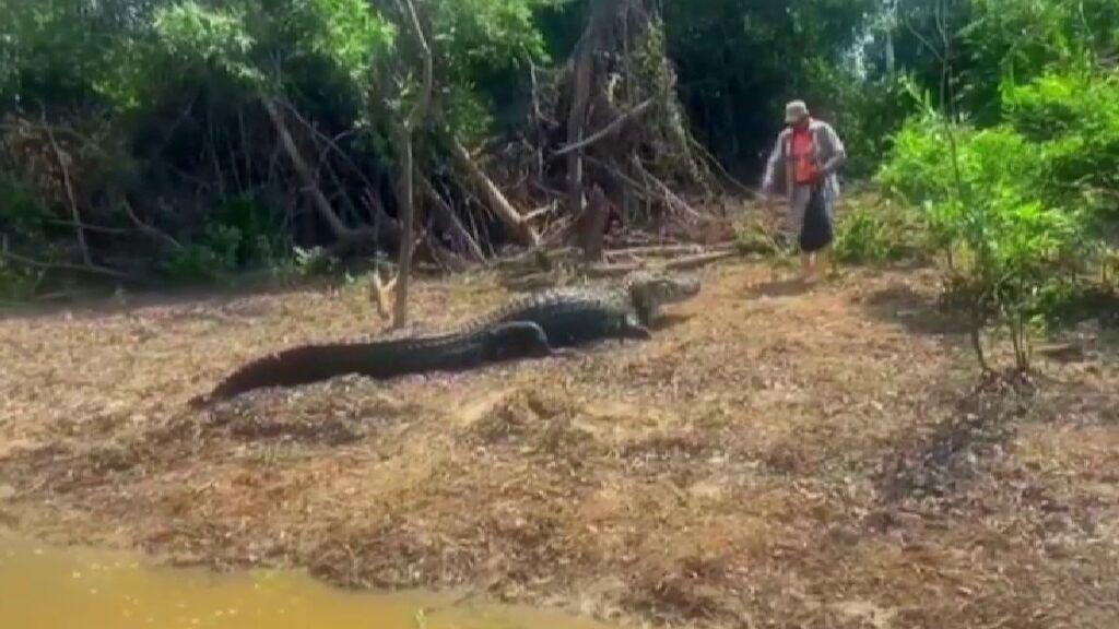 Jesús y Alejandro, la amistad entre un enorme caimán de cuatro metros y un guía turístico en Bolivia