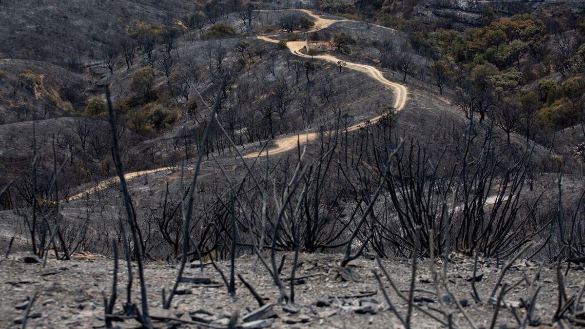 La imagen de una cabra con el lomo quemado: la fauna, muy afectada por el incendio de Sierra Bermeja