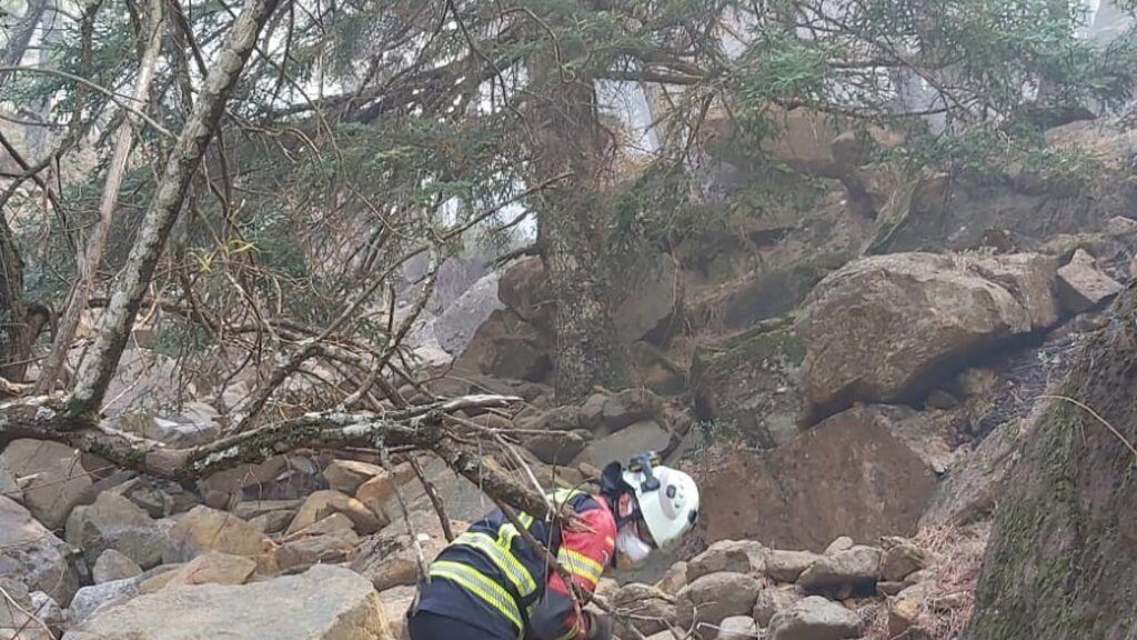La emoción de los bomberos al salvar pinsapos centenarios entre el caos del incendio de Sierra Bermeja