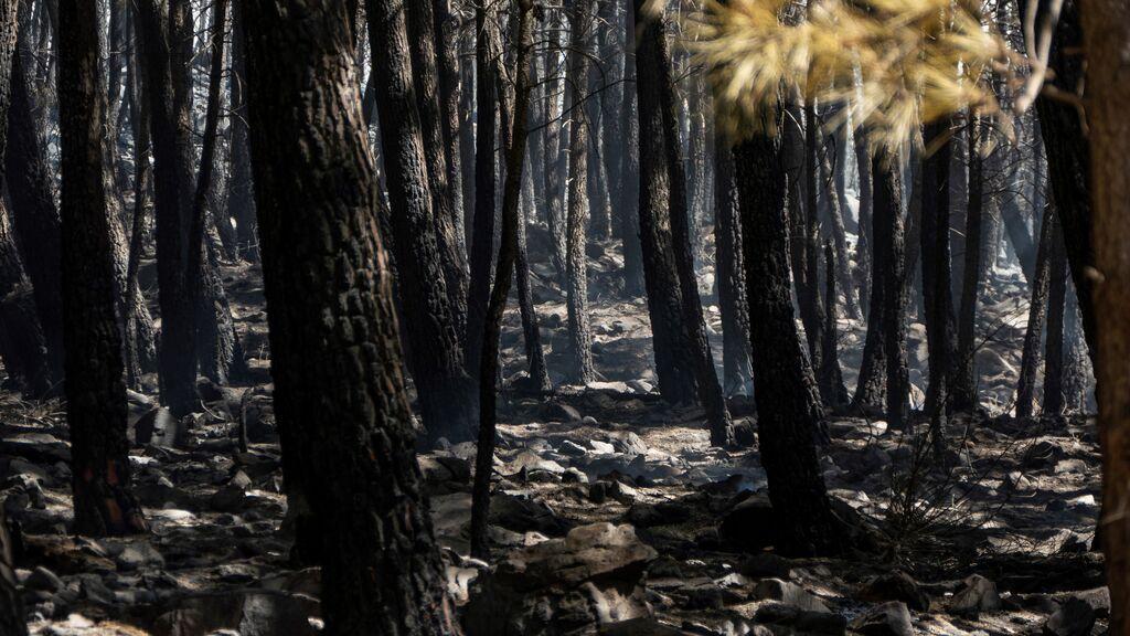 El incendio de Sierra Bermeja obliga a desalojar a miles de vecinos de varias localidades