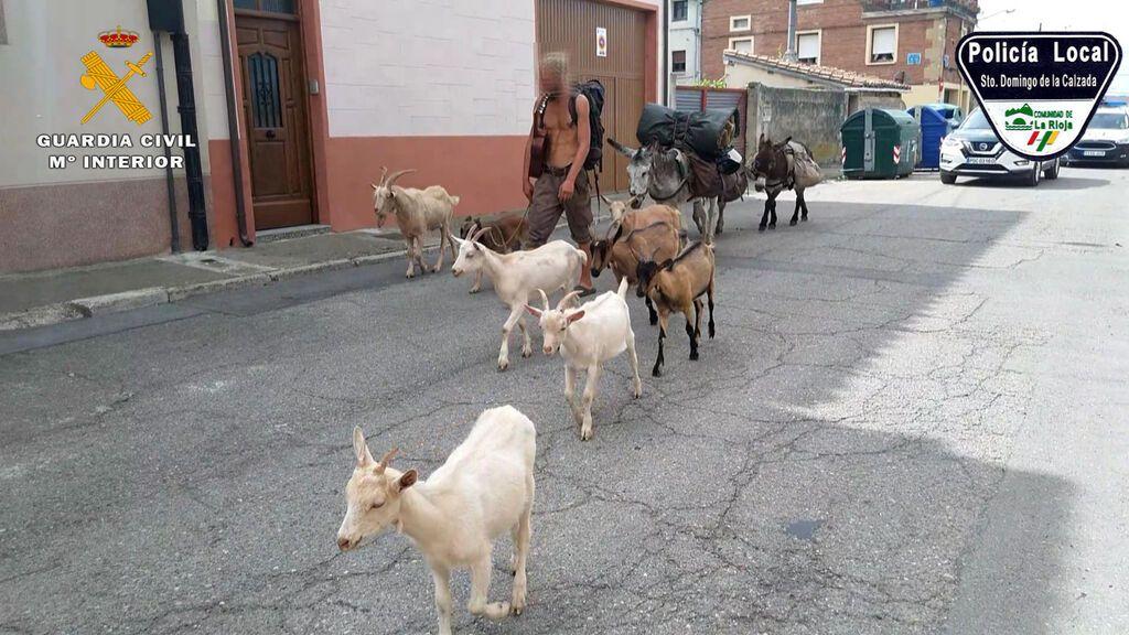Los animales de Pierre fueron trasladados a la Plaza de Toros.