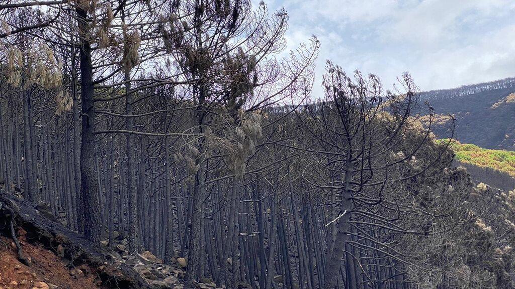 "La ""Zona Cero"" del incendio de Sierra Bermeja (Málaga)"