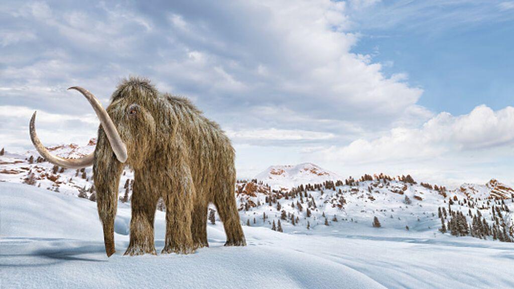 El regreso del mamut lanudo: los biocientíficos tienen un controvertido plan para resucitarlo
