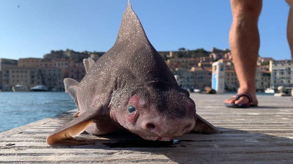 Aparece muerto a orillas del Mediterráneo un misterioso 'pez cerdo' que gruñe al salir del agua