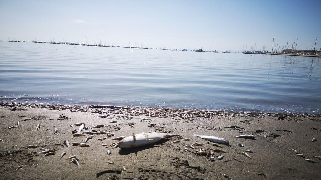 Piden que el Mar Menor sea el primer hábitat declarado en peligro de desaparición en España