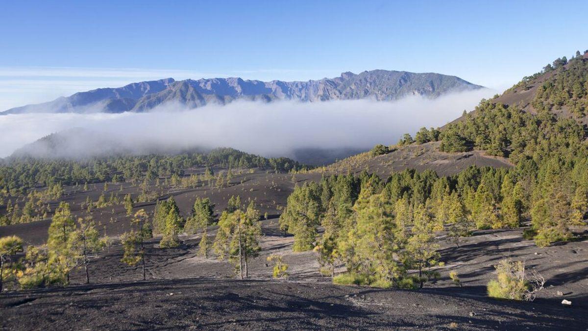 ¿Qué es el Pevolca y el semáforo volcánico de alerta de Canarias?