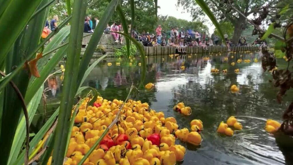 Cuatro mil patitos de goma compiten en Canterbury por ver quién es el más rápido