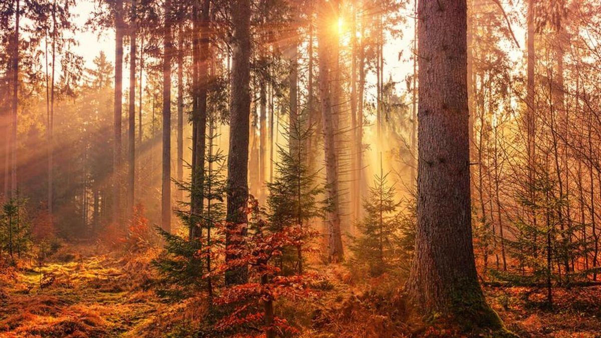 Llega el otoño: a qué hora empieza exactamente y cuánto durará