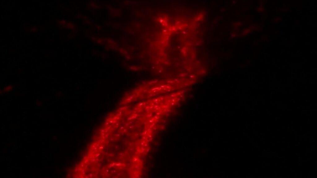 El tremor volcánico explicado por Pedro Piqueras
