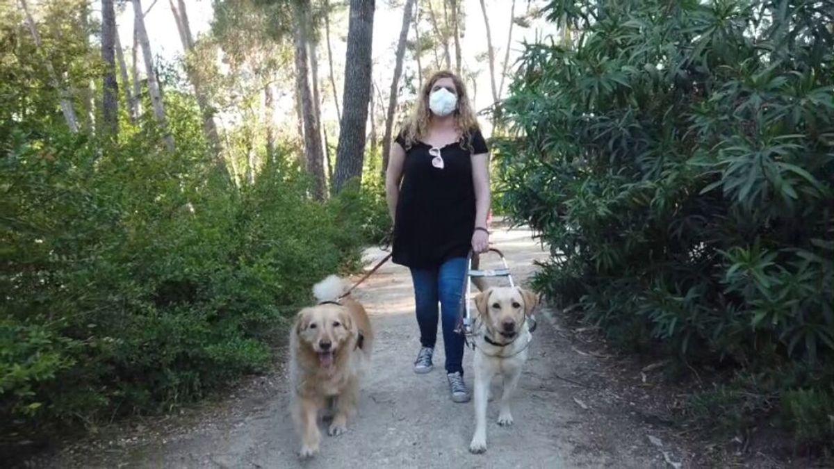 El proceso para convertirse en un perro guía