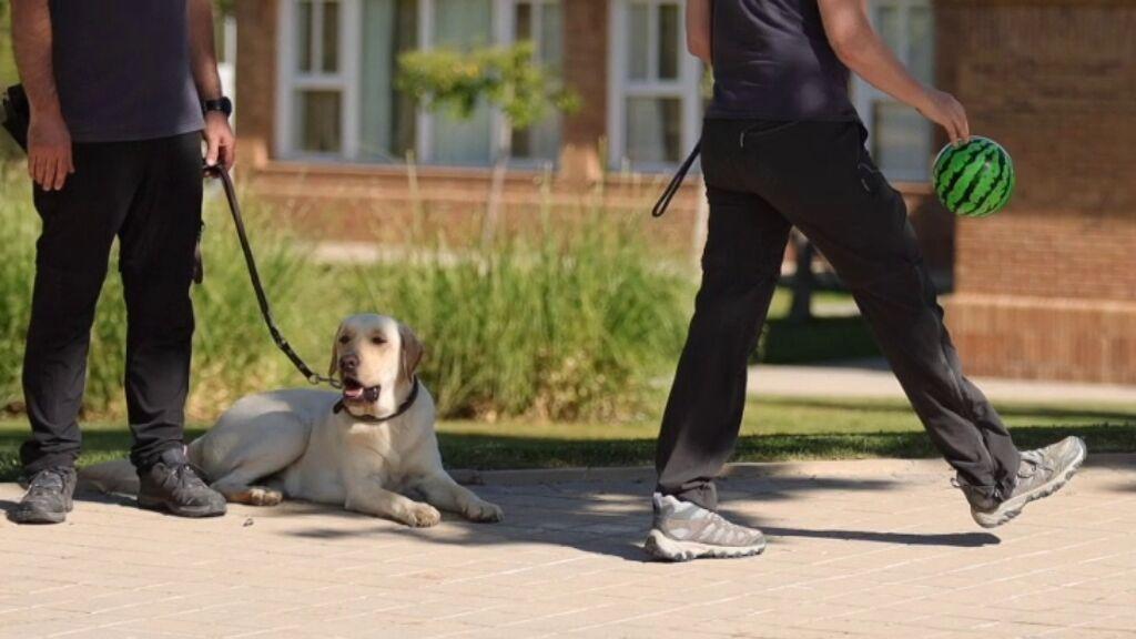 práctica perro guía