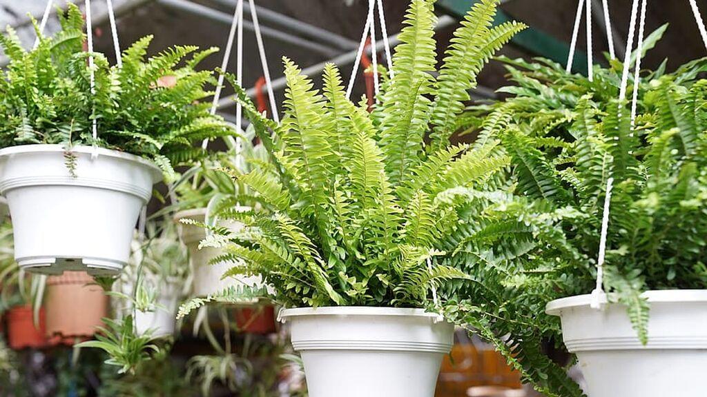 fern-tender-natural-foliage