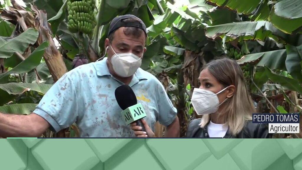 El platanero de La Palma pide ayuda entre lágrimas tras perder la cosecha