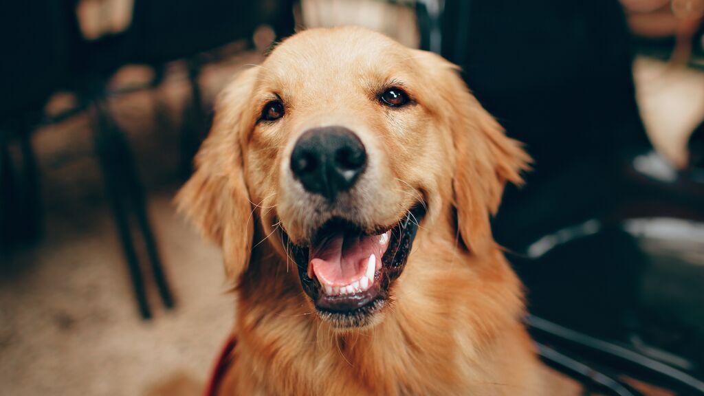 Nueva ley de protección y bienestar animal