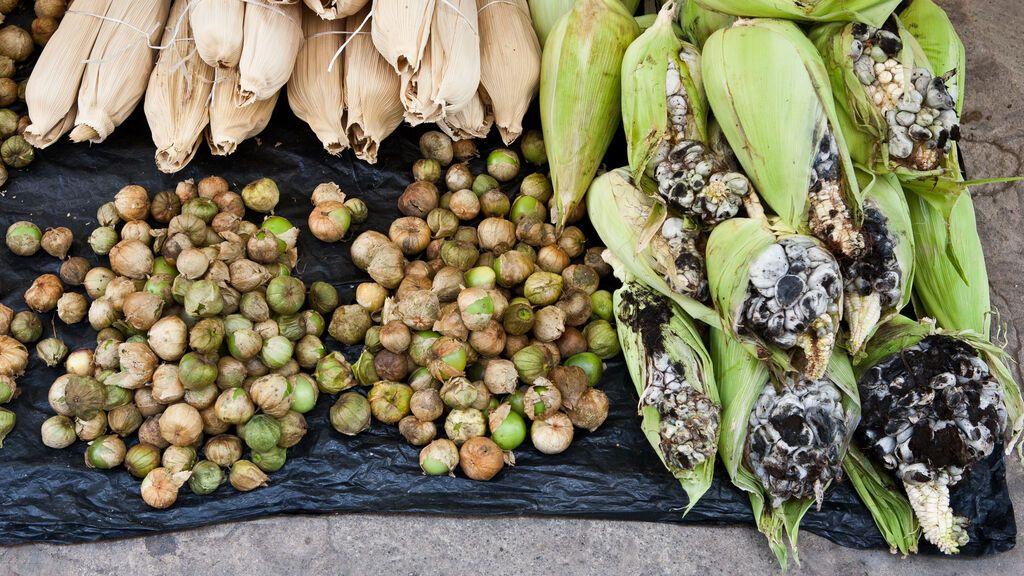 Huitlacoche: qué debes saber sobre este hongo mexicano