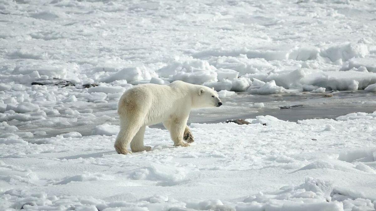 ¿Qué animales se encuentran en peligro de extinción?