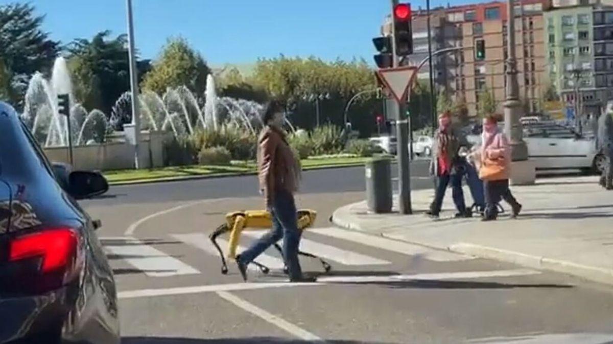 Una mujer pasea por las calles de León a Spot, un perro robot valorado en 63.000 euros