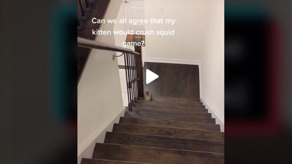 Se vuelve viral un gato que juega al estilo del 'El juego del calamar'