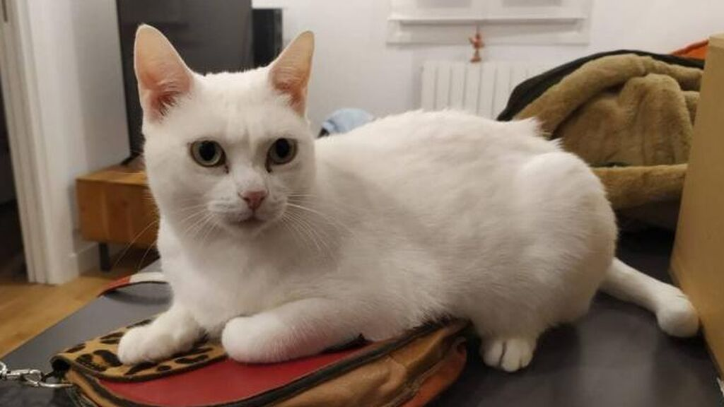 Una pareja bilbaína ofrece 1.000 euros de recompensa al que encuentre a su gata