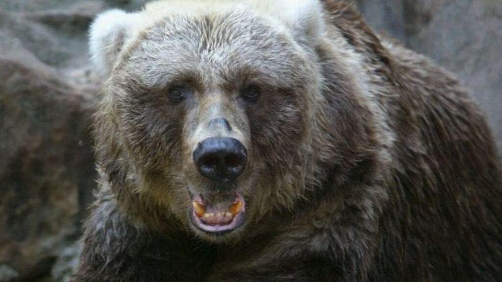 Captan el momento en que un oso ataca a la asistente de su domador en un circo ruso