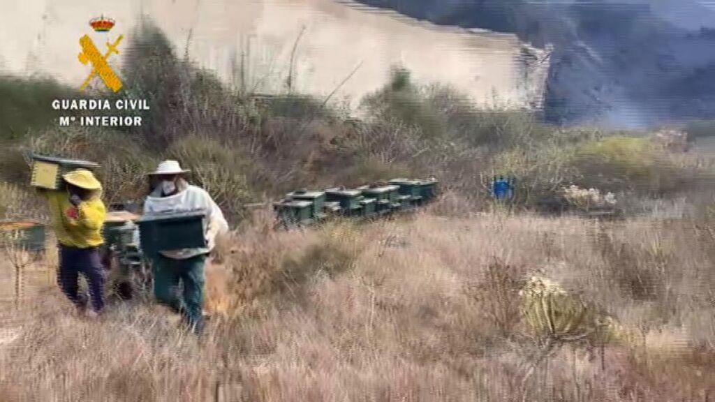 Tres colmenas de abejas entre los animales rescatados por los agentes del Seprona en La Palma