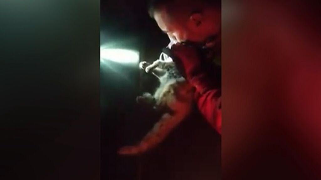 Un militar de la UME salva la vida de un gato que estaba en shock tras inhalar humo del volcán de La Palma